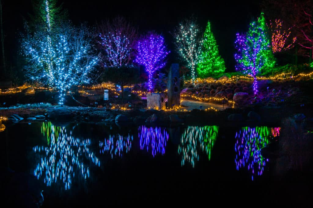 Christmas tree lights at Gardens Aglow in Maine by Paul VanDerWerf
