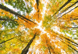 bright orange, yellow, and green leaves sparkling in the sunlight