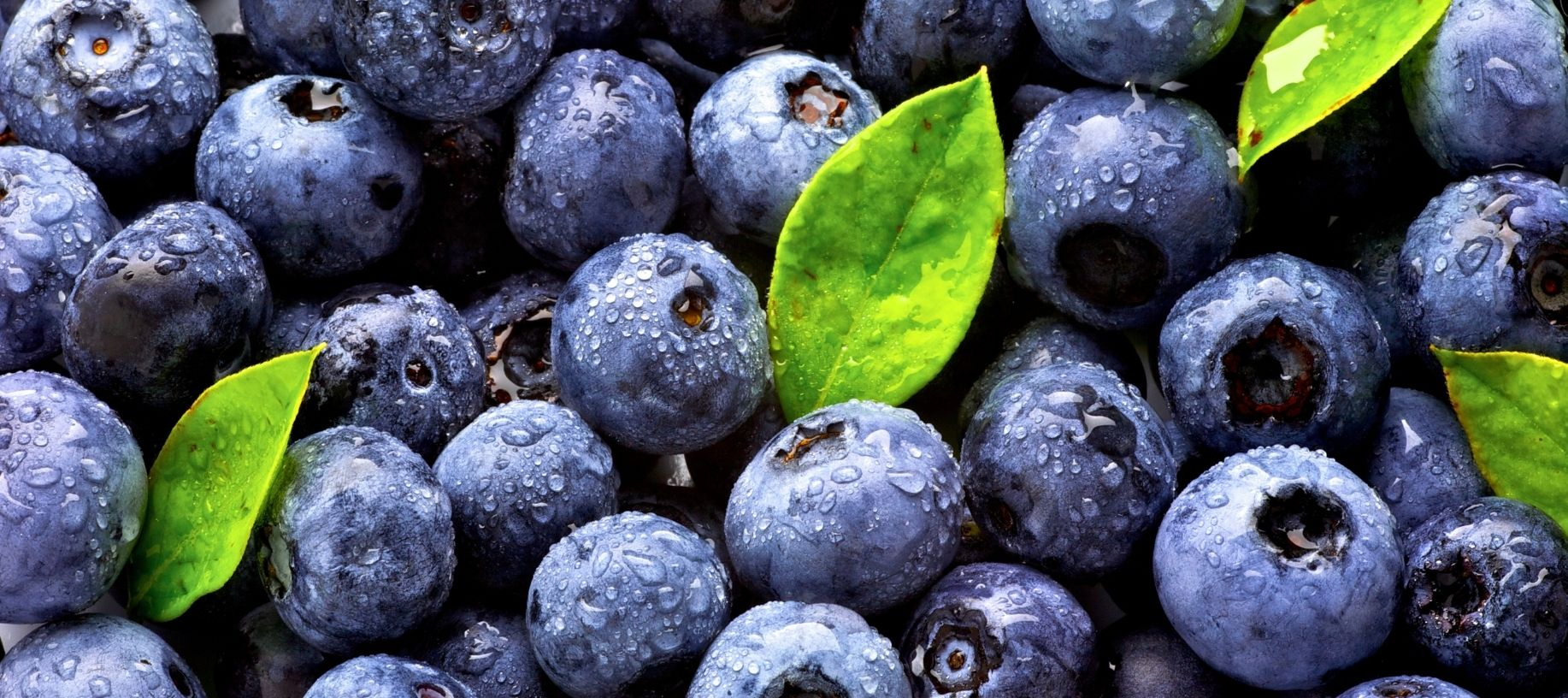 Plum, juice blueberries with bright green leaves
