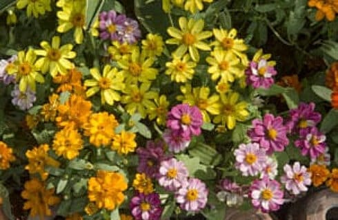 A profusion of pink, orange, yellow and purple flowers in a garden.