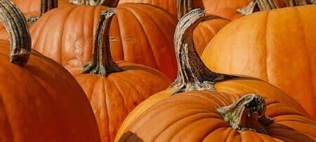 Several large orange pumpkins