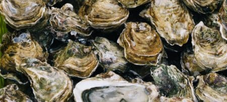 Pile of oysters in their shells