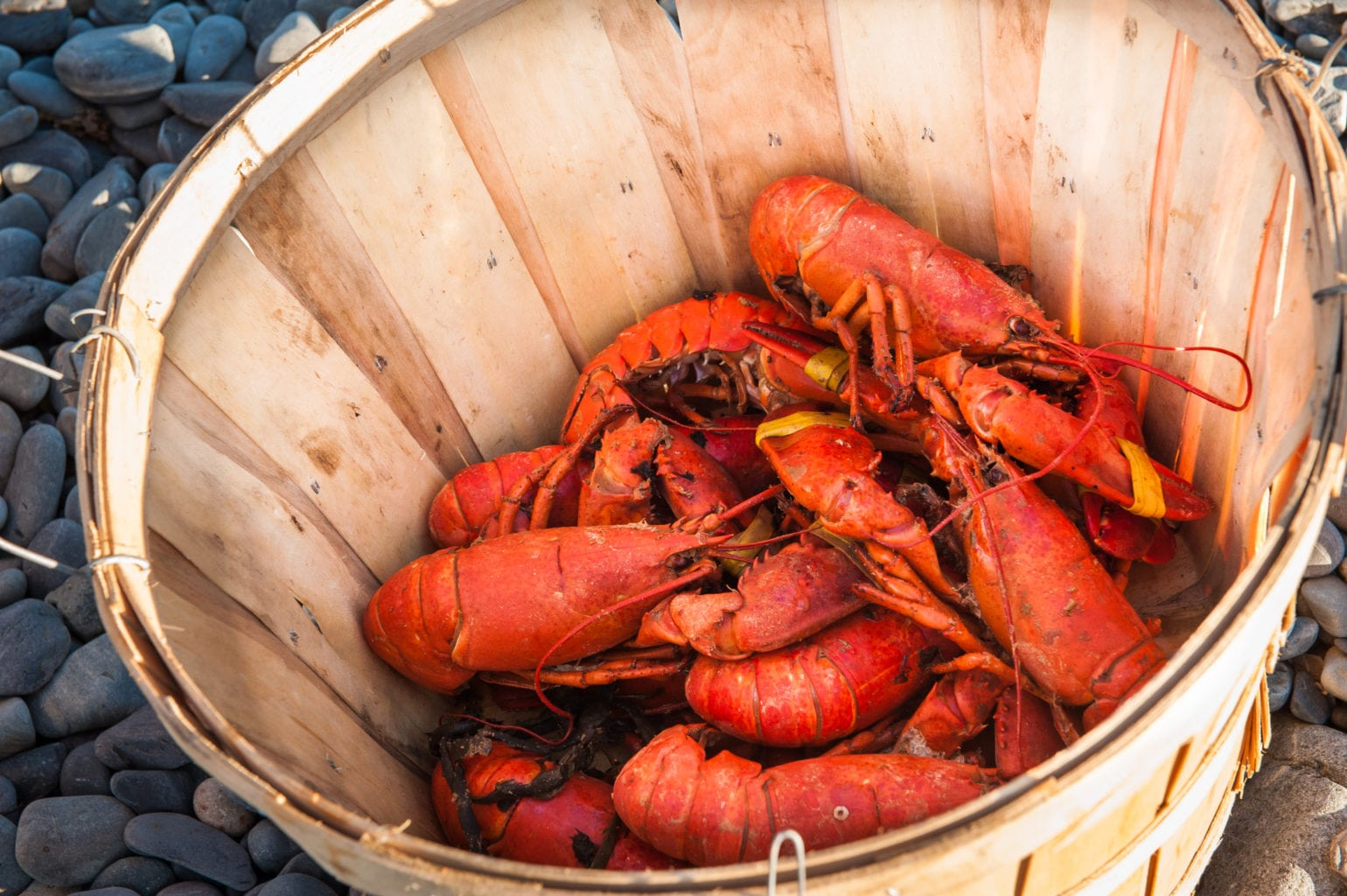 Where to find the Best Maine Lobster   Newcastle Inn